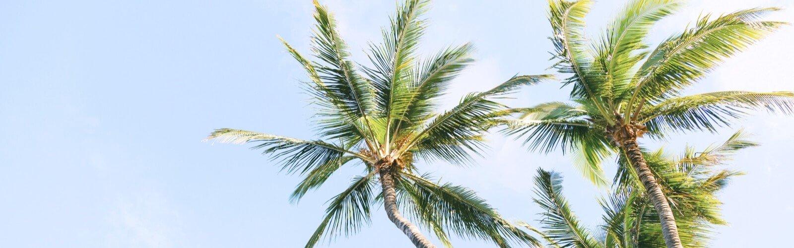Bright Coconut